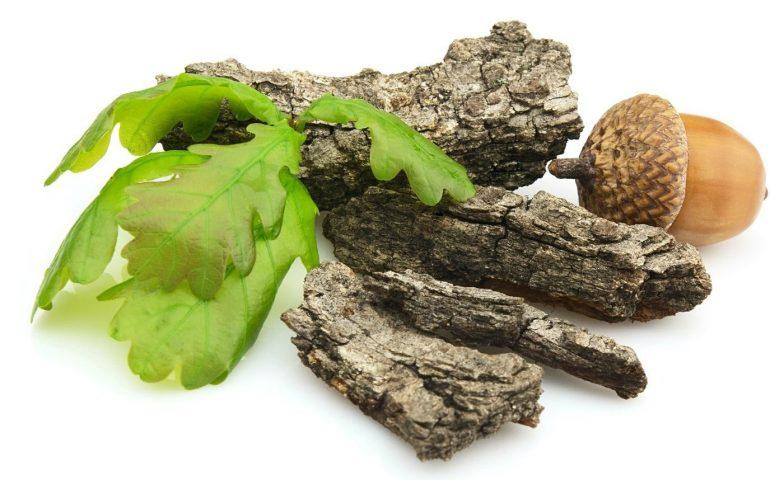 Чем полезна при геморрое кора дуба?