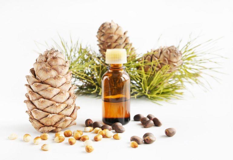 Состав и лечебные свойства кедрового масла